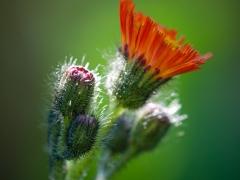 blommor-10