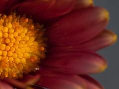 blommor-8
