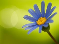 blommor-13